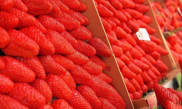 Erdbeeren sind lecker und gesund und fördern das abnehmen