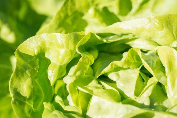 Salat Bündnerfleisch